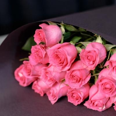 15 Trandafiri Fuchsia 50-60 cm