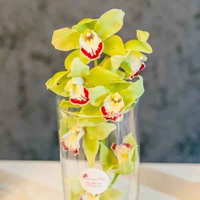 Orhidee verde în vaza