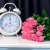 25 Trandafiri Fuchsia 50-60 cm