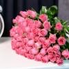51 Trandafiri Fuchsia