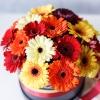 Cutie de Lux Medie cu Gherbere Mix Orange