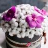 Cutie cu Bumbac și Orhidee Vanda