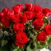 25 Trandafiri Roșii 70-80 cm
