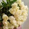 35 Trandafiri Albi 70-80 cm