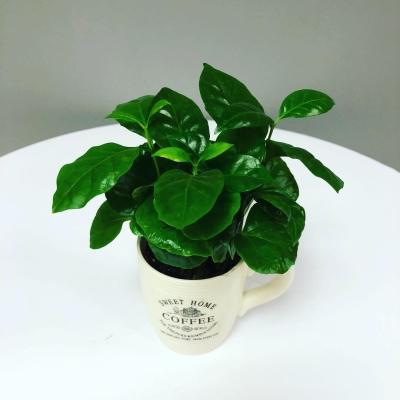 Aranjament din Plante Nr. 4