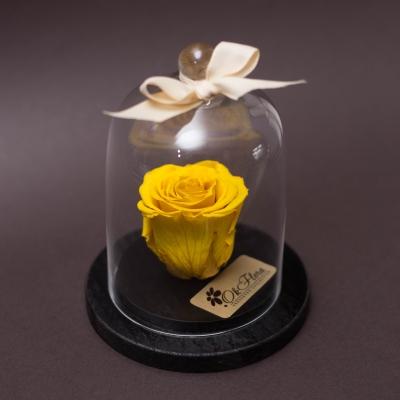 Trandafir Criogenat Galben în Cupolă Mică