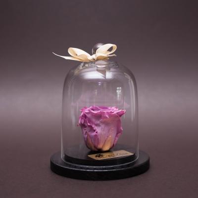 Trandafir Criogenat Mov în Cupolă Mică