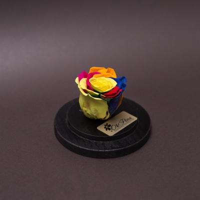 Trandafir Criogenat Rainbow în Cupolă Mică