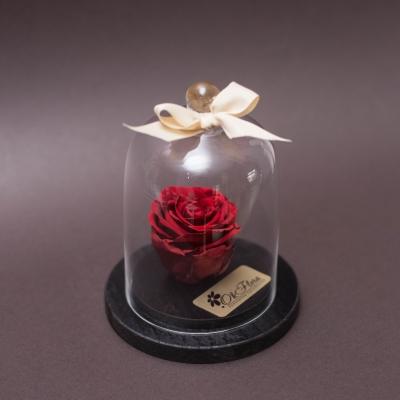 Trandafir Criogenat Roșu în Cupolă Mică