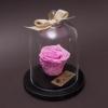 Trandafir Criogenat Roz în Cupolă Mică