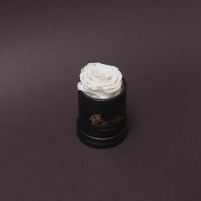 Trandafir Criogenat Alb în Mini-Cutie Neagră