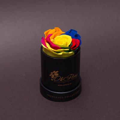 Trandafir Criogenat Rainbow în Mini-Cutie Neagră