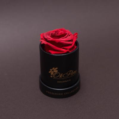 Trandafir Criogenat Roșu în Mini-Cutie Neagră