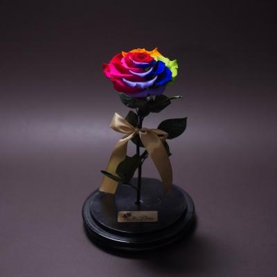 Trandafir Criogenat Rainbow Mare în Cupolă Mare