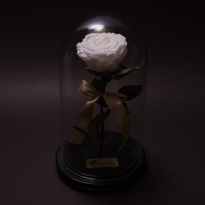 Trandafir Criogenat Alb Mare în Cupolă Mare