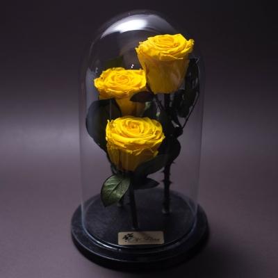 3 Trandafiri Criogenați Galbeni în Cupolă Mare