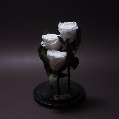 3 Trandafiri Criogenați Albi în Cupolă Mare