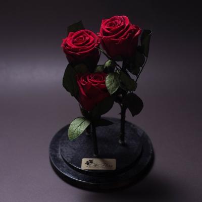 3 Trandafiri Criogenați Roșii în Cupolă Mare