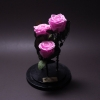3 Trandafiri Criogenați Roz în Cupolă Mare