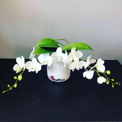 Orhidee de birou