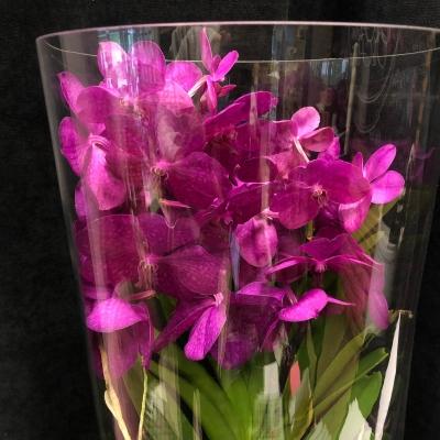 Orhidee Vanda în Tub