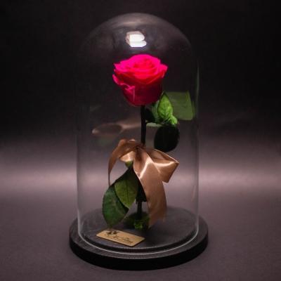 Trandafir Criogenat Fuchsia în Cupolă Mare