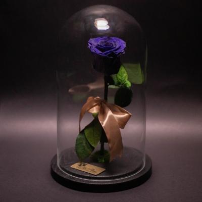 Trandafir Criogenat Mov în Cupolă Mare