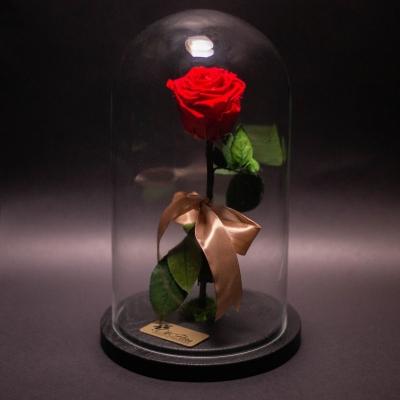 Trandafir Criogenat Roșu în Cupolă Mare