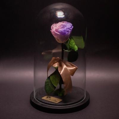 Trandafir Criogenat Roz-Mov în Cupolă Mare