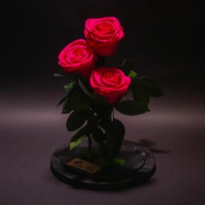 3 Trandafiri Criogenați Fuchsia în Cupolă