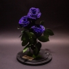 3 Trandafiri Criogenați Mov în Cupolă
