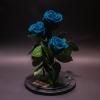3 Trandafiri Criogenați Turcoaz în Cupolă