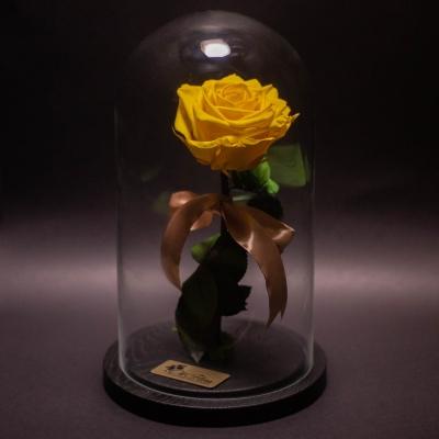 Trandafir Criogenat Galben Mare în Cupolă