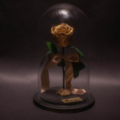 Trandafir Criogenat Golden în Cupolă