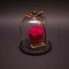 Trandafir Criogenat Fuchsia în Mini-Cupolă