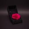 Trandafir Criogenat Fuchsia Mare în Cutie de Catifea