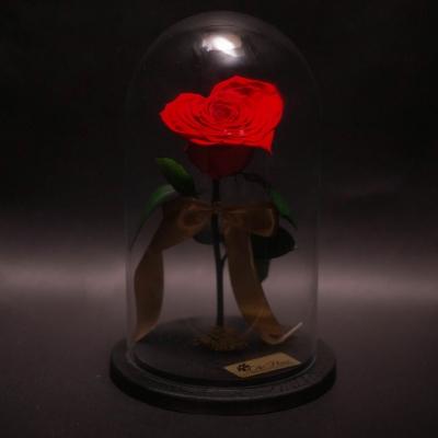 Trandafir Criogenat Inimă Roșie în Cupolă