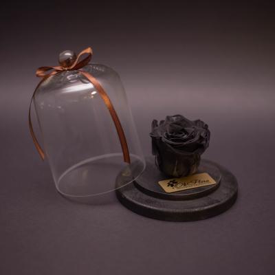 Trandafir Criogenat Negru în Mini-Cupolă