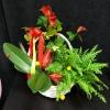 Aranjament din Plante Nr. 11