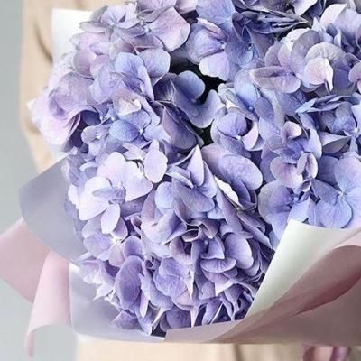 Buchet din 5 Hortensii Albastre