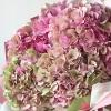 Buchet din 7 Hortenzii Roz