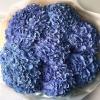 Buchet din 9 Hortensii Blue