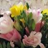 Lădiță de primăvara