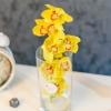 Orhidee galbena în vaza